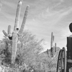boy-cactus